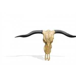 Stylebook Collection Vegan Hunting Trophy - Buffalo Head with Black Horns
